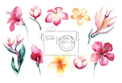 Hand gezeichnet Aquarell tropischen Blume gesetzt. Exotische Palmblätter, Dschungelbaum, Brasilien tropische Botanik Elemente und Blumen. Perfekt für Stoffdesign. Aloha Design.
