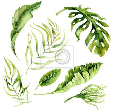 Hand gezeichnet Aquarell tropischen Pflanzen gesetzt.