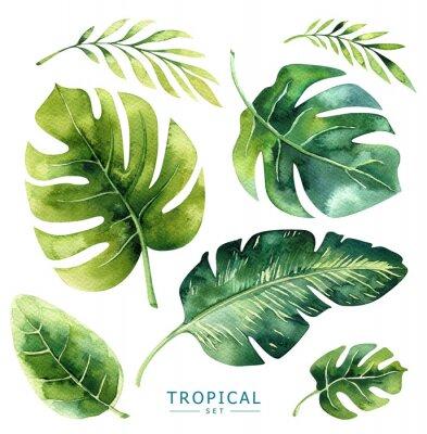 Hand gezeichnet Aquarell tropischen Pflanzen gesetzt. Exotische Palmblätter, Dschungelbaum, brasilianische Bord-Elemente. Perfekt für Stoffdesign. Aloha Sammlung.