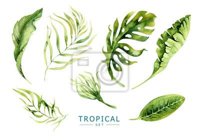 Hand gezeichnet Aquarell tropischen Pflanzen gesetzt. Exotische Palmblätter, j