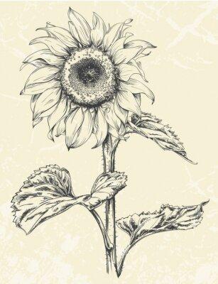 Sticker Hand gezeichnet Sonnenblume mit Blättern ans Stammzellen isoliert auf strukturierten Hintergrund