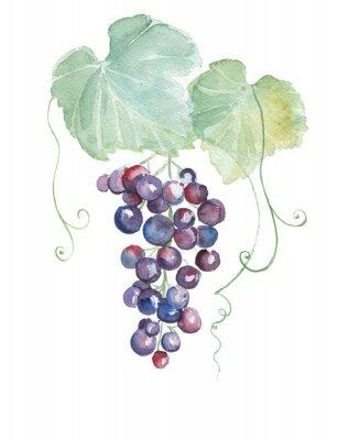 Sticker Hand gezeichnete Aquarellillustrationen der purpurroten Trauben