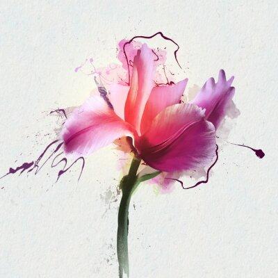 Sticker Helle schöne Tulpe auf einem weißen Hintergrund. Eine Gattung von mehrjährigen krautigen Zwiebelpflanzen der Familie Lily