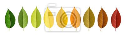 Sticker Herbst Blatt-Set in Farbe Palette in Zeile angeordnet, isoliert auf weiß, für Herbst Design und Dekoration. Realistische Vektor-Illustration.