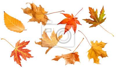 Sticker Herbst Blätter isoliert auf weißem Hintergrund Sammlung