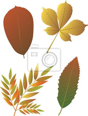Herbst leaves.Vector