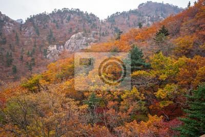 Herbst Wald mit ein wenig Dunst auf Hintergrund