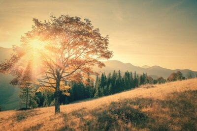 Sticker Herbstbaum und Sunbeam warmen Tag Landschaft in Jahrgang getönten