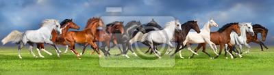 Herde von Pferden auf Sommer Weide, Banner für Website