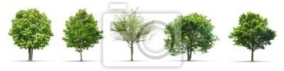 Sticker High Definition Sammlung Baum isoliert auf weißem Hintergrund