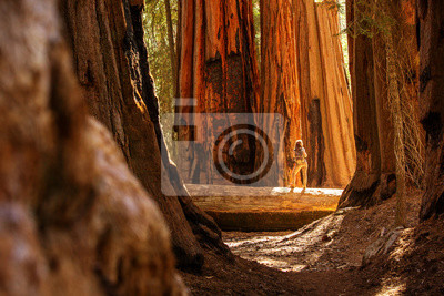 Sticker Hiker in Sequoia national park in California, USA