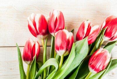 Sticker Hintergrund für Glückwünsche, Grußkarten. Frische Frühlingstulpen blüht, auf weißem hölzernem Draufsichtspaßraum des Hintergrundes