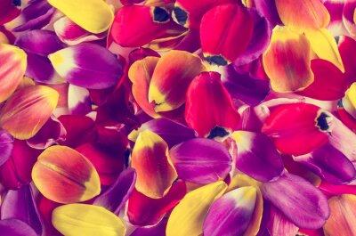 Sticker Hintergrund von Blumenblatttulpen