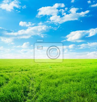 Hintergrundbild der üppigen Wiese unter blauen Himmel