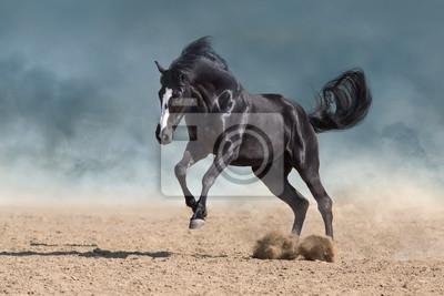 Horse free run gallop in sandy dust