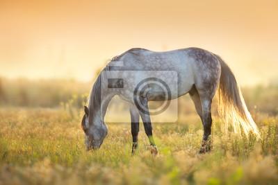 Horse grazing at sunlight