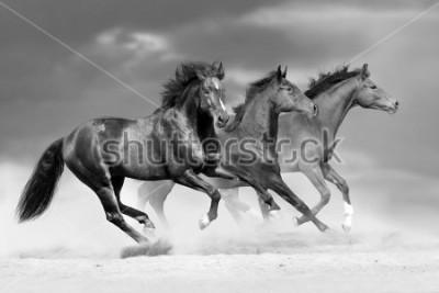 Sticker Horse herd run in dust