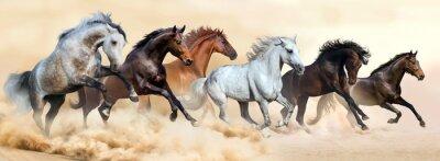 Horse Herde laufen in Wolken von Staub