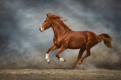 horse runs gallop in a field