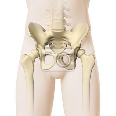 Hüfte-anatomie - 3d-grafik notebook-sticker • wandsticker anatomisch ...