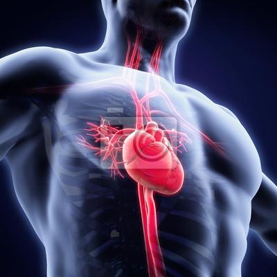 Human heart anatomy notebook-sticker • wandsticker medicals ...