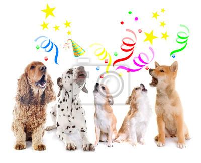 Hunde Heulen Zum Geburtstag Notebook Sticker Wandsticker Shiba Inu