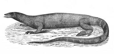 Illustration of the Nile Varanus Niloticus in the old book The Encyclopaedia Britannica, vol. 14, by C. Blake, 1882, Edinburgh