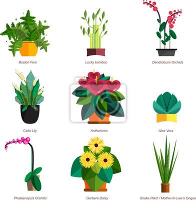 Illustration Von Zimmerpflanzen Innen Und Buro Pflanzen In Topf