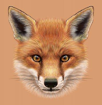 Sticker Illustrative Porträt eines Red Fox. Das niedliche flaumige Gesicht des Waldes Fox.