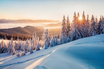 Sticker Impressive winter morning in Carpathian mountains with snow covered fir trees. Colorful outdoor scene, Happy New Year celebration concept. Artistic style post processed photo.