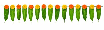 Sticker Indian flower garland of mango leaves and marigold flowers. Ugadi diwali ganesha festival poojas weddings functions holiday ornate decoration. Isolated on white background natural mango leaf garland