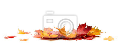 Sticker Isolated Autumn Leaves
