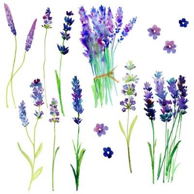 Sticker Isolierte Provence Lavendelblüten. Aquarell floralen Set für Ihr Design.