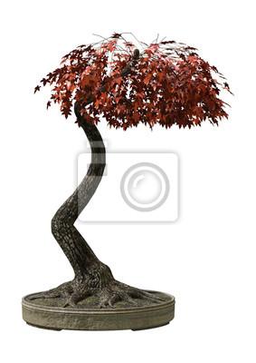 Japanischer Bonsais-Ahornbaum der Wiedergabe-3D auf Weiß