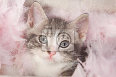 Junge Kätzchen im Karton