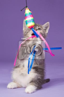 Junge Kätzchen spielt mit Regenbogen Spielzeug-Maus