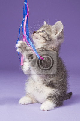 Junge Kätzchen spielt mit rosa Spielzeug-Maus
