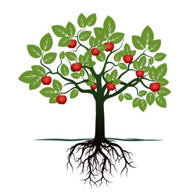 Sticker Junger Baum mit grünen Blättern, Wurzeln und roten Äpfeln. Abbildung