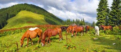 Sticker Karpatische Mustangs in Gorgany