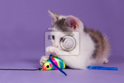 Kätzchen mit Regenbogen Spiel Maus