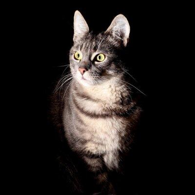 Sticker Katze, schwarzer Hintergrund