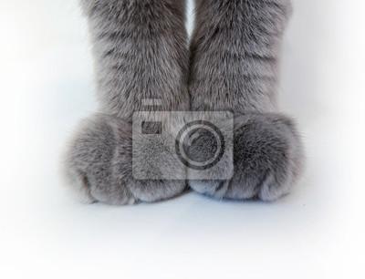 Katzenpfoten auf einem weißen Hintergrund
