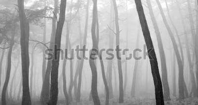 Sticker Kiefer gesehen durch den Nebel