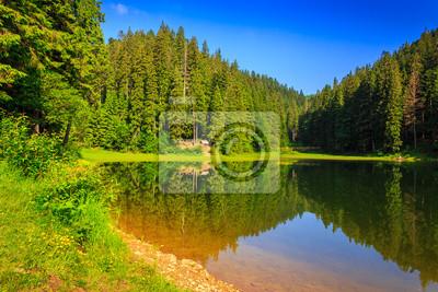 Kiefernwald und See in den frühen Morgen