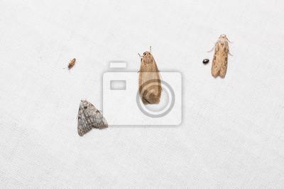 Sticker Kleine Motten Auf Weißem Bildschirm