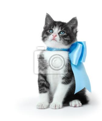 Kleines Kätzchen mit einem Bogen auf einem weißen Hintergrund