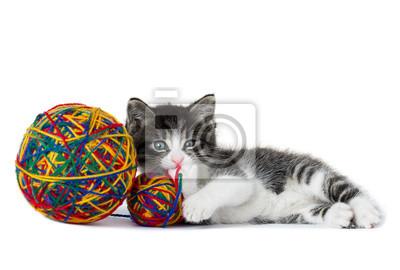 Kleines Kätzchen mit einem Wollknäuel auf einem weißen Hintergrund