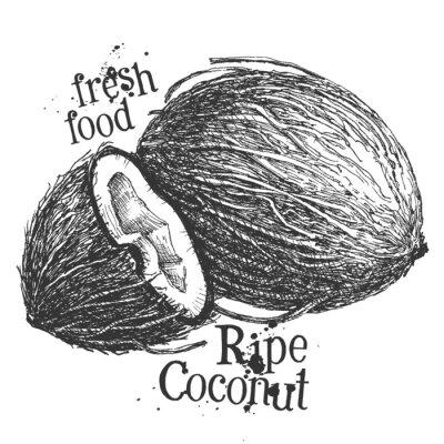 Sticker Kokosnuss auf weißem Hintergrund. Skizze