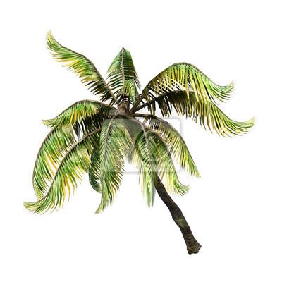 Kokosnuss-Palme Coconat-3D auf Weiß