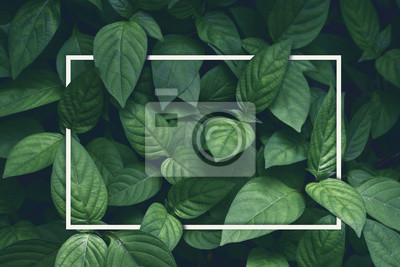 Sticker kreativer Plan, grüne Blätter mit Rahmen des weißen Quadrats, flache Lage, für die Werbung der Karte oder der Einladung